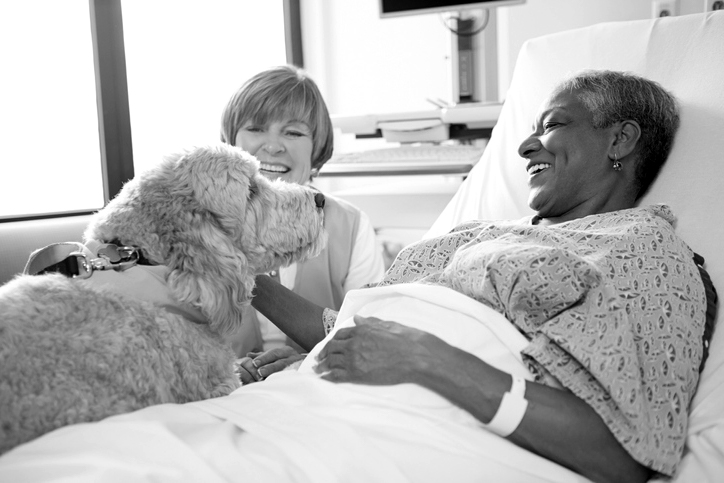 therapy dog greets hospital patient